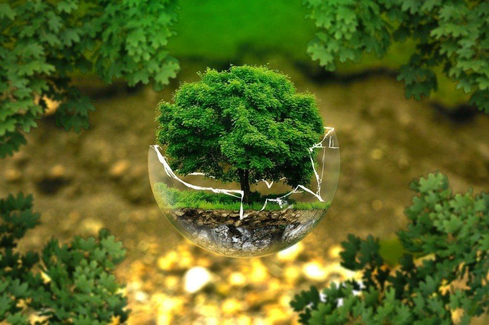 Tree growing in a broken glass sphere