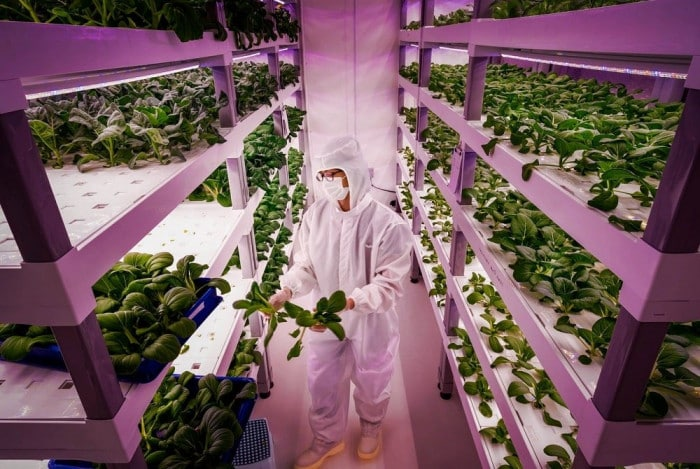 Investing in vertical farming